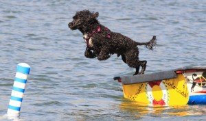 black dog jumping off of a dock in the water