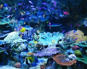 brightly colored coral reef with tropical fish swimming around